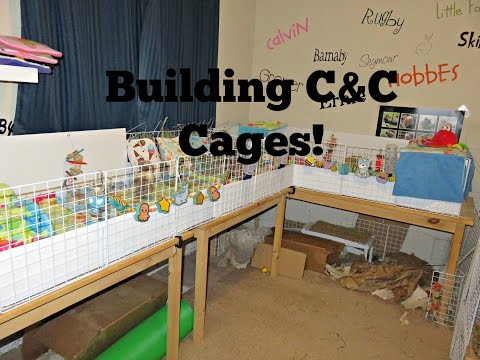 GoPro: Building C&C Cages For Guinea Pigs