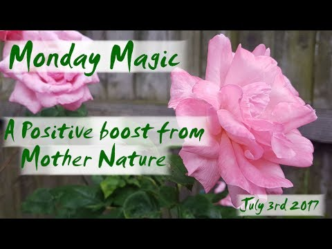 Monday Magic - 3rd June - Roses are red....or pink, or orange, or...