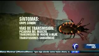 Скачать Mal De Chagas