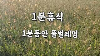 1분멍/1분 휴식 / 1분동안 풀벌레멍/휴식