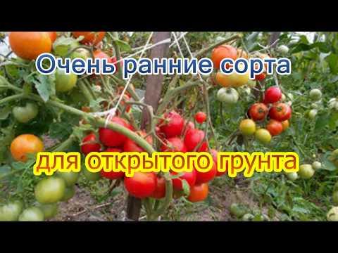 Очень ранние сорта для открытого грунта | суперранние | посадки_2018 | фитофтора | помидоров | лагенария | помидоры | лабрадор | семена | ранние | огурцы