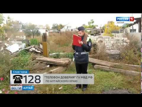 В Славгороде полицейские обнаружили теплицу с коноплёй