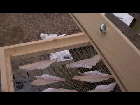 Fish Drying Rack And Dried Haddock
