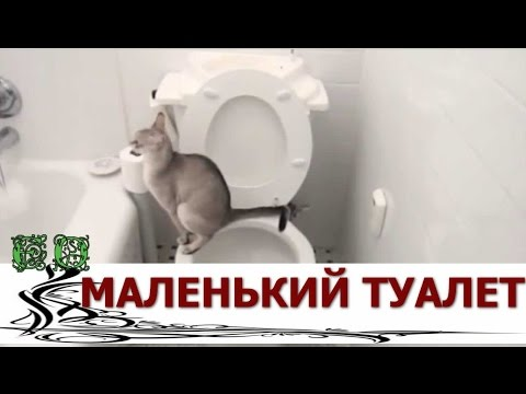 видео: Дизайн туалета маленького размера, как сделать его особенным