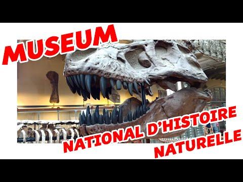 Museum national d'histoire naturelle | Paléontologie et anatomie comparée