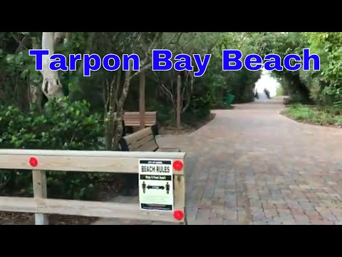Shelling At Tarpon Bay Beach - Public Beach On Sanibel Island