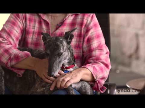 Greyhound Rescue Mini Documentary