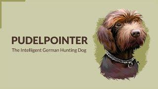 Pudelpointer   The Intelligent German Hunting Dog