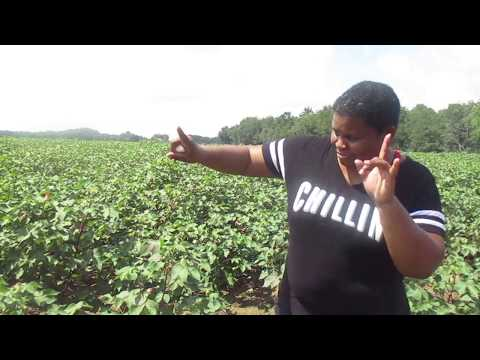 The Black Farmer In America -  A Black Female Farm History & Story  How we got paid 2