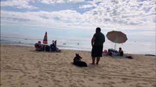 "German Shepherd "" Django ""   Amazing Transformation   Hampton Roads dog trainers"