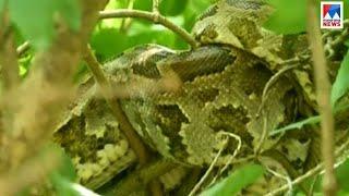 chengannur koduvalanji -snake