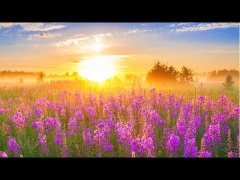 Сборник красивой музыки для души! Эдгар Туниянц - Мелодия мира