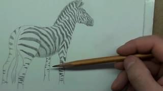 Рисуем зебру карандашом