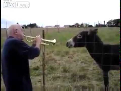 Man Verses Singing Donkey