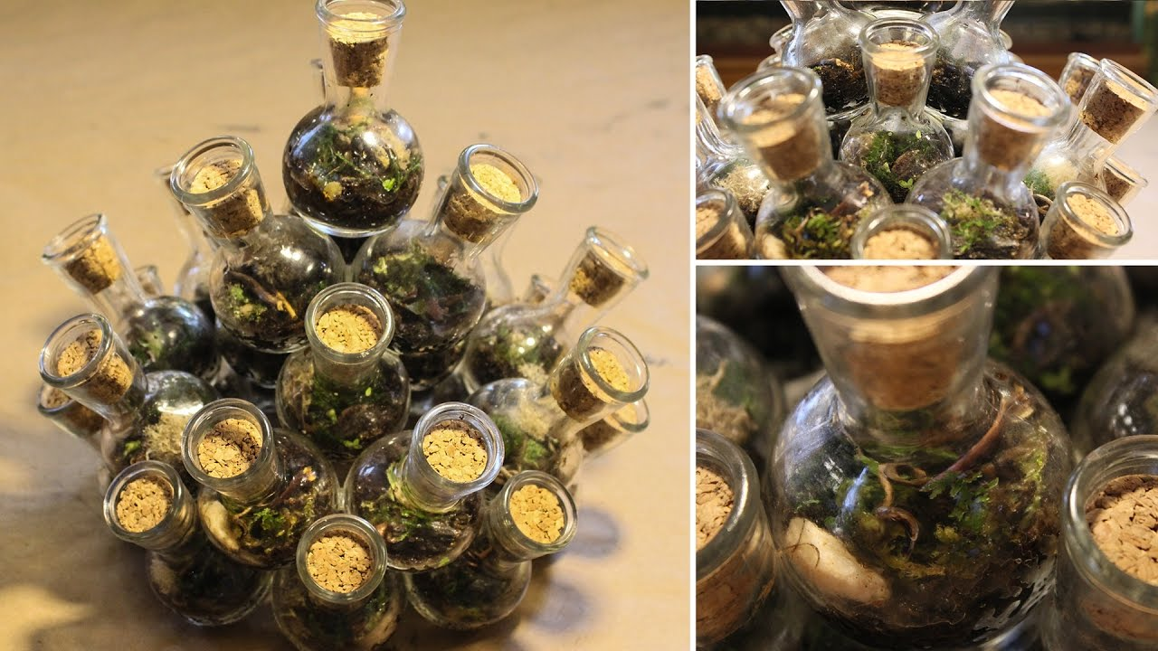 25 Closed Terrariums In 1 How I Made A Chambered Terrarium Youtube