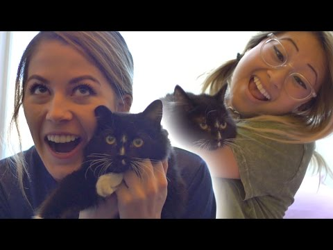 People Confess Their Love For Cats