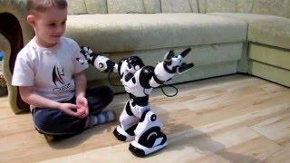 фиксики таким игрались Робот  SMART ROBOWISDOM2.  Умный радиоуправляемый робот  You Tube