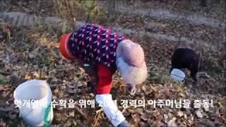 2017년 헛개열매수확_황금약초농장