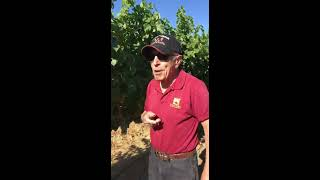 A walk in the vineyard with Chaim Gur-Arieh
