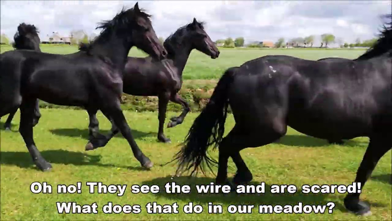 Friesian Horses move with Uniek and the foals go to pasture.