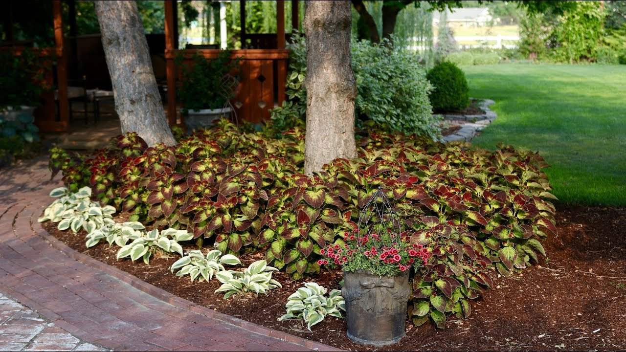 Before After Dipt In Wine Coleus And Autumn Frost Hosta Youtube