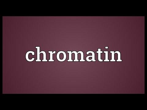Header of chromatin
