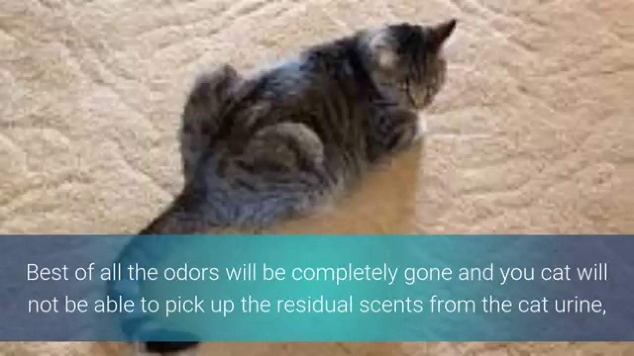 How to get rid of urine smell from carpet from dog
