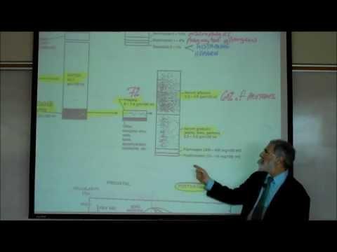 HEMATOLOGY; PART 1 by Professor Fink.wmv