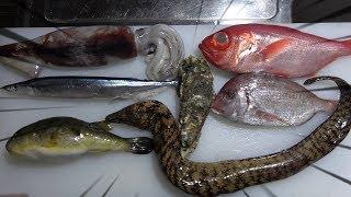 7つの珍魚!?7種類のお魚を食らってみた!
