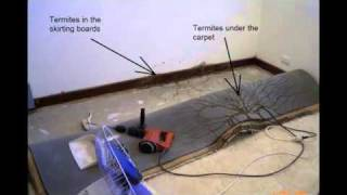 Introduction to Westkill Pest Control