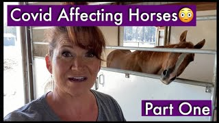 COVID Affecting Horses| Part 1| Coronavirus and Animals| COVID-19| Coronavirus and Horses| Colic