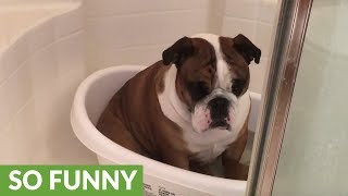 Rocky loves his bath soaks and would like some privacy to finish hi...