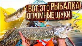 БЕШЕНЫЙ КЛЁВ ПОПАЛИ НА ЖОР ЩУКИ КЛЮЁТ ОДНА ЗА ОДНОЙ ЛОВЛЯ ЩУКИ НА СПИННИНГ Рыбалка 2021
