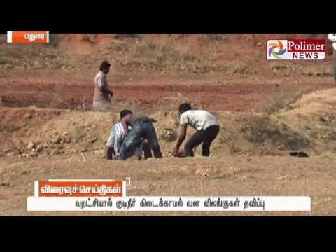 Madurai NGO's had build artificial pond for Forest Life | Polimer News