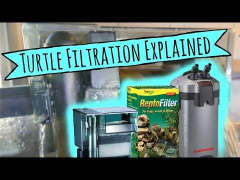 Turtle Filtration Explained | Turtle 101