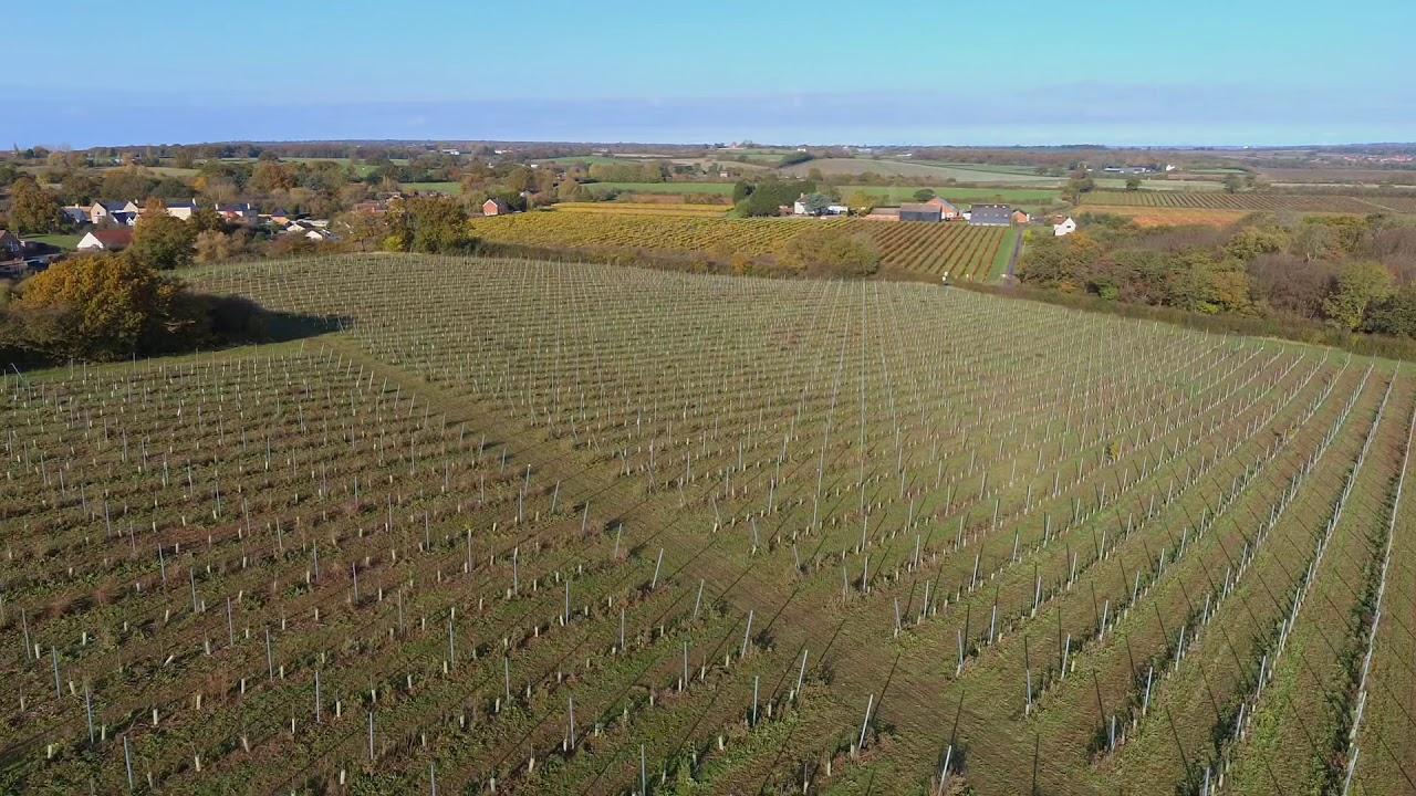 New Hall Vineyard, Essex