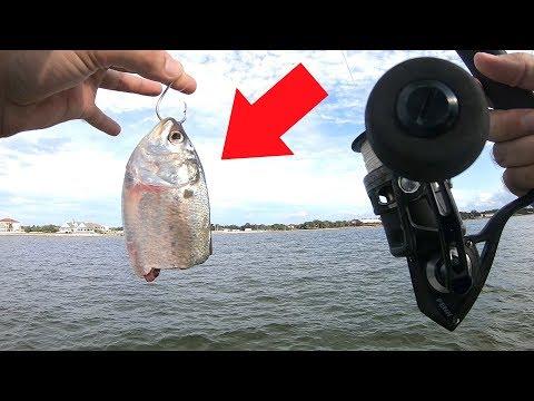 Using BIg Cut Bait For Tasty Bottom Fish