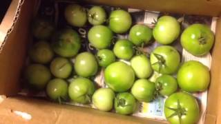 How to store Green Tomatoes