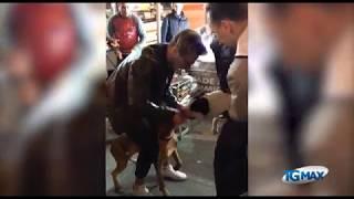 Cani si azzannano alla fiera degli ambulanti a Lanciano