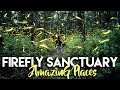 AMAZING FIREFLY SANCUARY [THOUSANDS] | TLAXCALA MEXICO