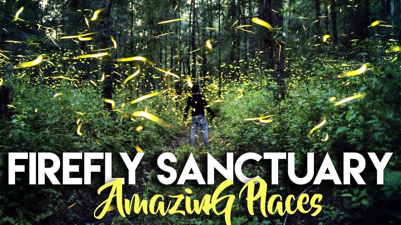 8 Minutes of Joy: Firefly Sanctuary