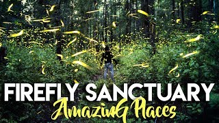 AMAZING FIREFLY SANCTUARY [THOUSANDS] | TLAXCALA MEXICO