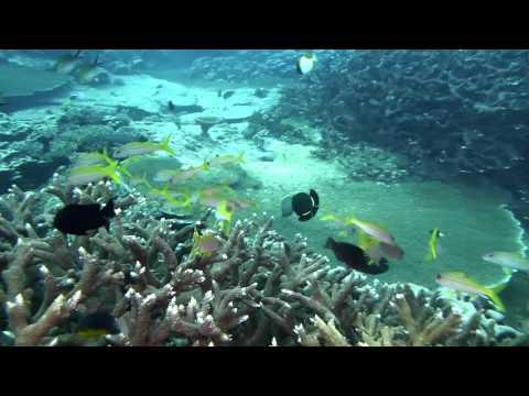 Scuba Diving Cocos Keeling Islands