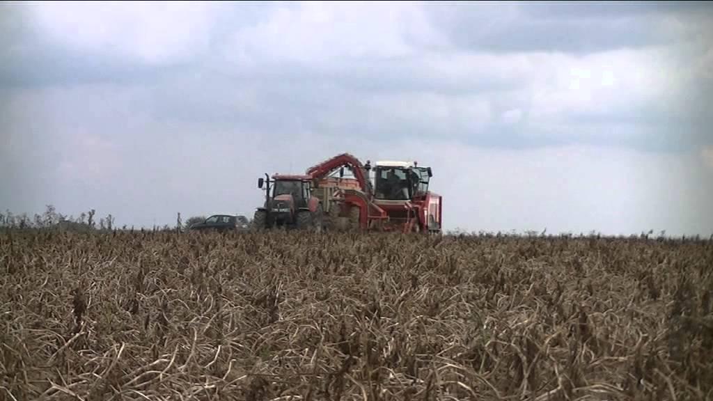 Recolte pomme de terre 2014 dans le santerre youtube - Pomme de terre recolte ...