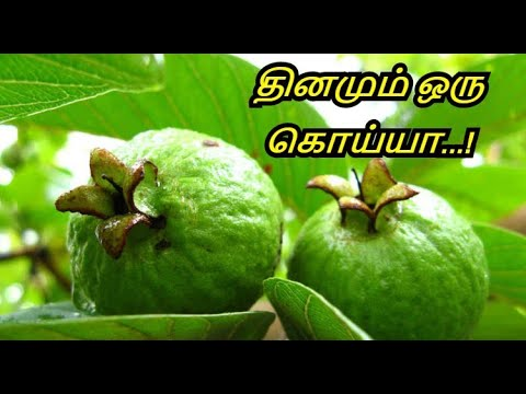 Amazing Guava Benefits in Tamil - Guava Fruit Benefits - Health and Medical Benefits of Guava.