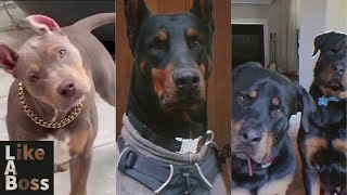 Most Badass Dog Glow Ups!