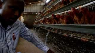 Chicken Cages In Kenya