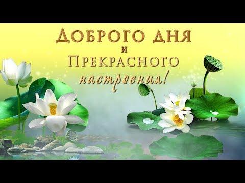 🎶💗Доброго дня и прекрасного настроения! 🎶💗Самое красивое оригинальное пожелание!