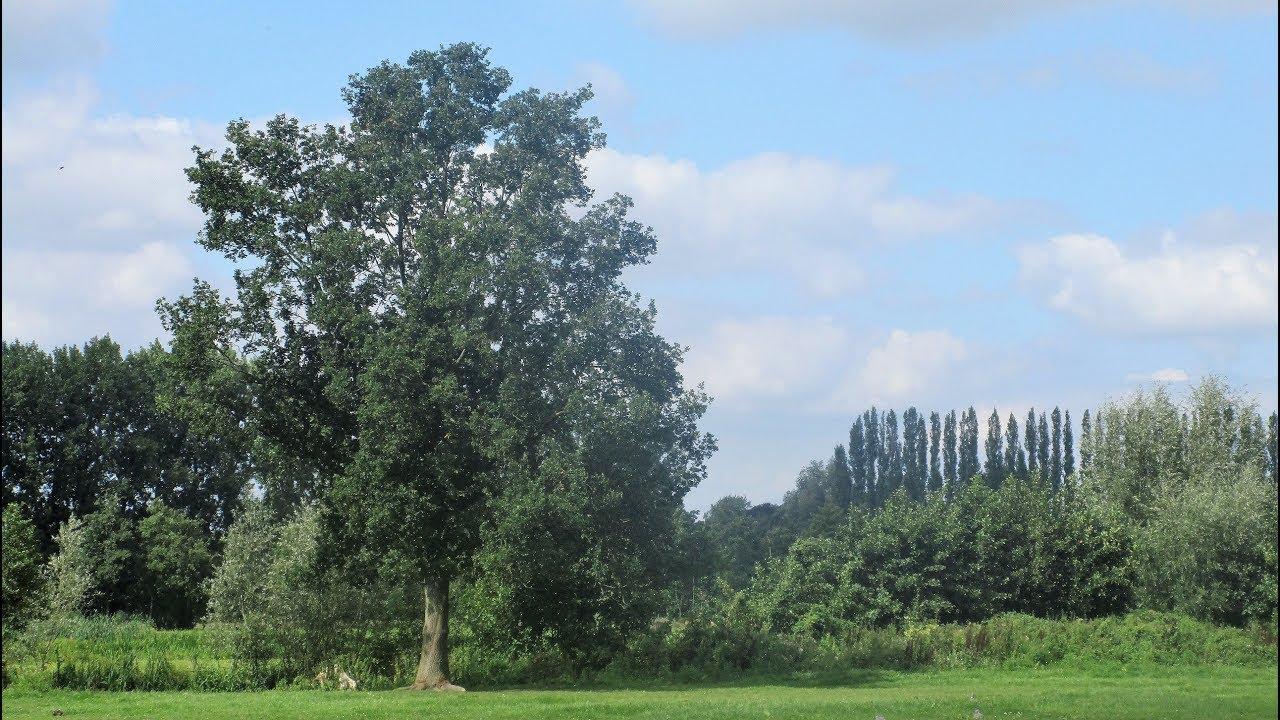 Download Het geheimzinnige leven van bomen: een schitterende wereld in beeld en woord door Catherine Boone