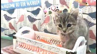 LIVE: Adoptable Kitten Shower  | The Dodo + Meow for Now